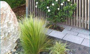 37 Luxus toms Garten Genial