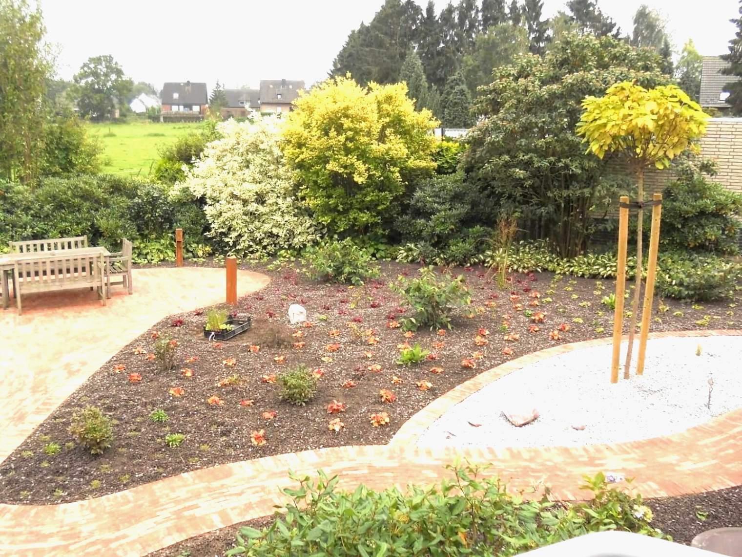 cogitore winterharte kubelpflanzen als sichtschutz winterharte kubelpflanzen als sichtschutz 1