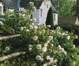 Traum Garten Das Beste Von France