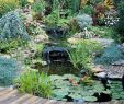 Traum Garten Elegant Marvelous Backyard Ponds and Water Garden Landscaping Ideas
