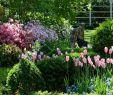 Traum Garten Frisch Pin Von Nane Sierck Auf Garten