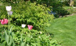 38 Neu Tulpen Im Garten Einzigartig
