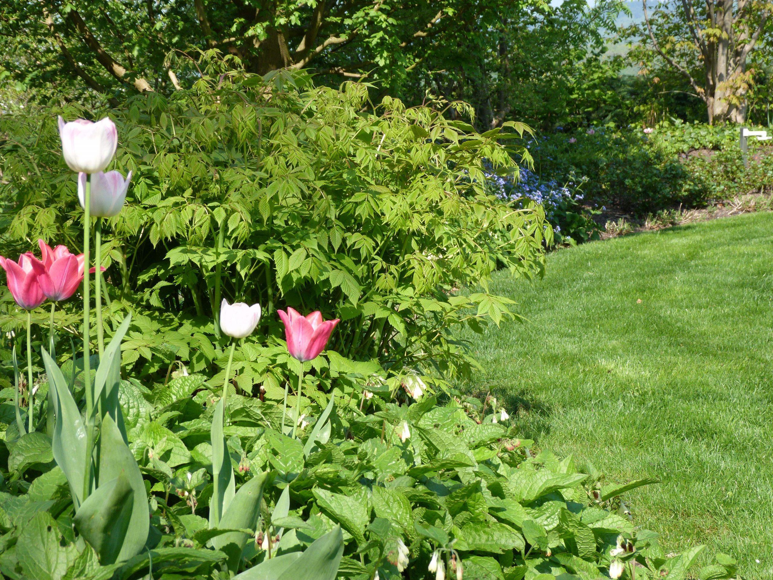 Tulpen Im Garten Einzigartig Akzente Setzten Mit Tulpen Farbtupfer Im Frühjahr
