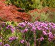 Tulpen Im Garten Einzigartig Der Garten Im Herbst Herbst Das Gartenjahr