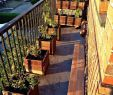 überdachung Garten Einzigartig 27 Luxus Garten Büsche Schön