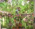 überdachung Garten Frisch 27 Luxus Garten Büsche Schön