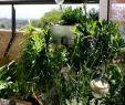 überdachung Garten Luxus 27 Luxus Garten Büsche Schön
