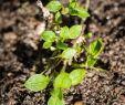 Unkraut Garten Genial Unkraut Früh Erkennen