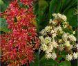 Unkraut Im Garten Bestimmen Das Beste Von Die 267 Besten Bilder Von Garten