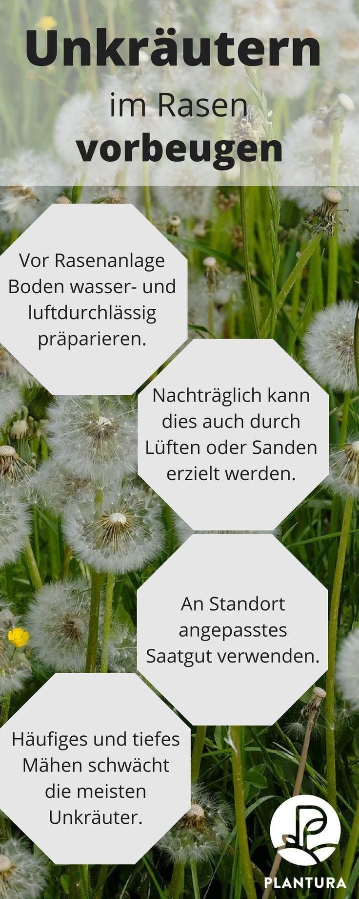 Unkraut Im Garten Das Beste Von Unkraut Im Rasen Unkrautvernichter & Alternativen