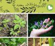 """Unkraut Im Garten Inspirierend 9 Gesunde """"unkräuter"""" Nicht Bekämpfen sondern Aufessen"""