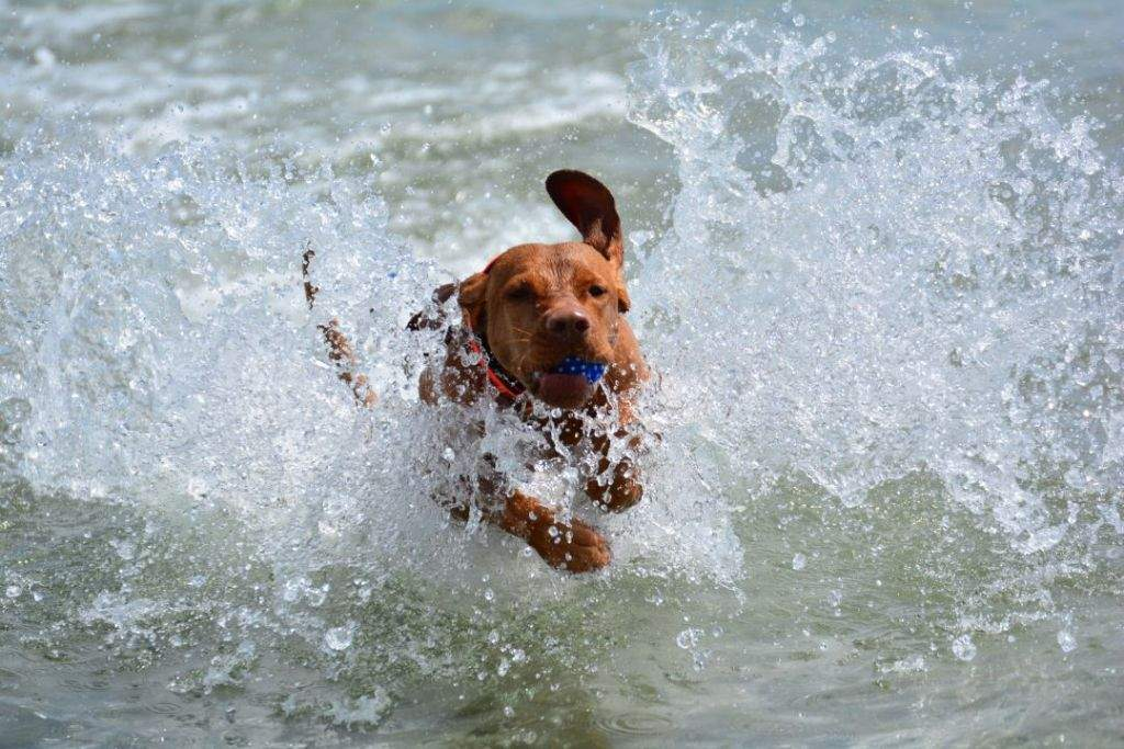 Urlaub Mit Hund Allgäu Eingezäunter Garten Das Beste Von Bildergalerie Von Urlaub Mit Hund In Ostseenähe Komplett