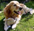 Urlaub Mit Hund Allgäu Eingezäunter Garten Das Beste Von Ferienhäuser Mit Hund Urlaub Mit Hund Im Ferienhaus