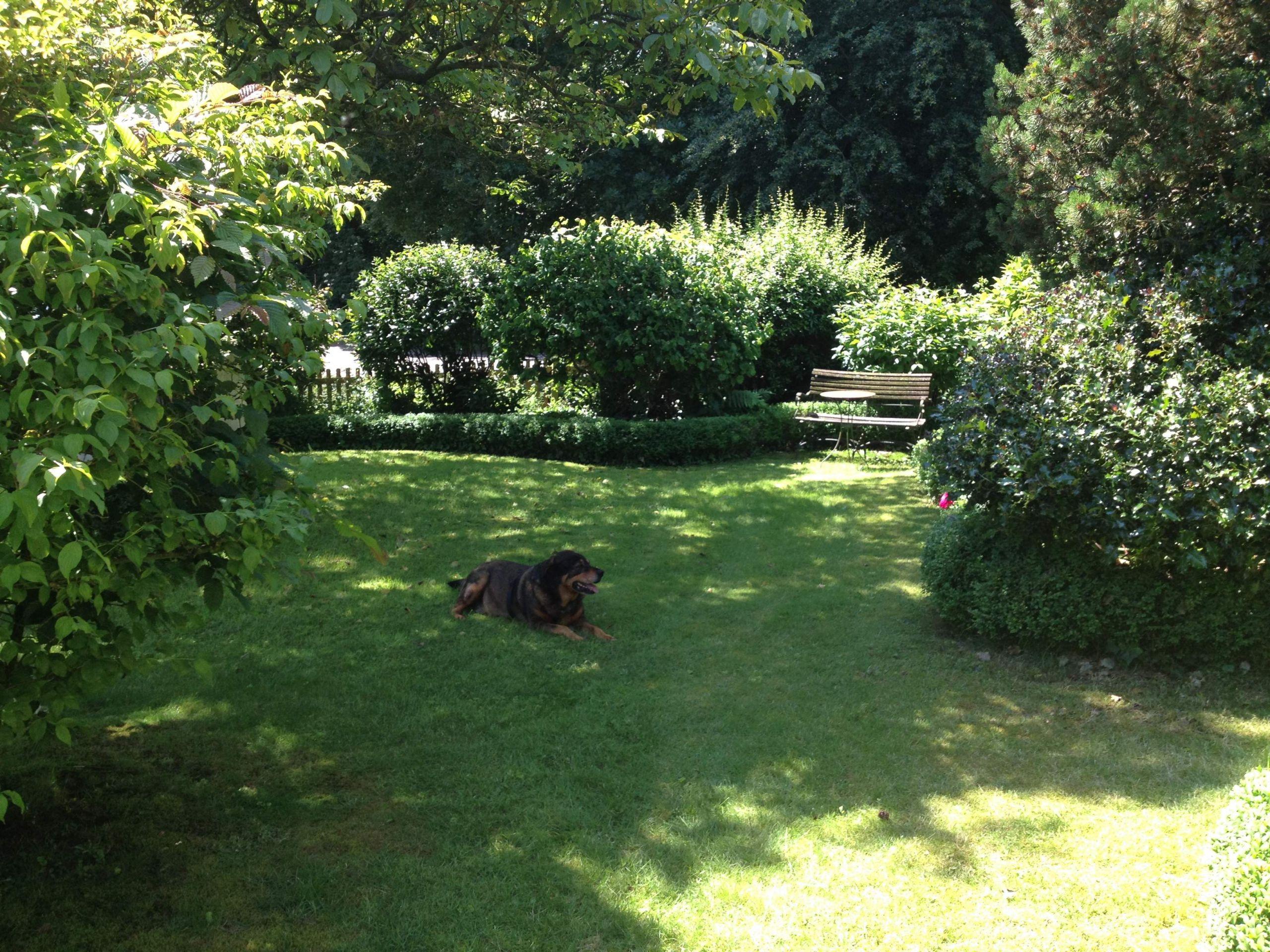 Urlaub Mit Hund Allgäu Eingezäunter Garten Luxus Ferienhaus Am Wald