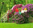 Versailles Garten Das Beste Von 28 Inspirierend asia Garten Zumwalde Luxus