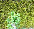 Vertikal Garten Einzigartig Vertikaler Garten Anleitung — Temobardz Home Blog