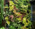 Vertikaler Garten Frisch 15 Beautiful Minimalist Vertical Garden for Your Home