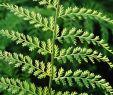 Vertikaler Garten Innen Reizend Pflanzen Für Den Vertikalen Garten