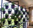 Vertikaler Garten Kaufen Frisch Vertikaler Garten Anleitung — Temobardz Home Blog