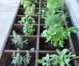 Vertikaler Garten Kaufen Schön Mini Kräutergarten Am Balkon Oder An Der Fensterbank In