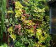 Vertikaler Garten Selber Machen Elegant 15 Beautiful Minimalist Vertical Garden for Your Home