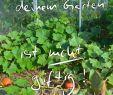 Verwilderter Garten Das Beste Von Mythen über Gemüse Anbauen Sie Stimmen Nicht