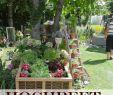 Verwilderter Garten Reizend Die 101 Besten Bilder Von Gartengestaltung