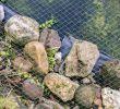Vlies Garten Inspirierend Anbringen Von Einem Vogelschutznetz Hilfreiche Tipps
