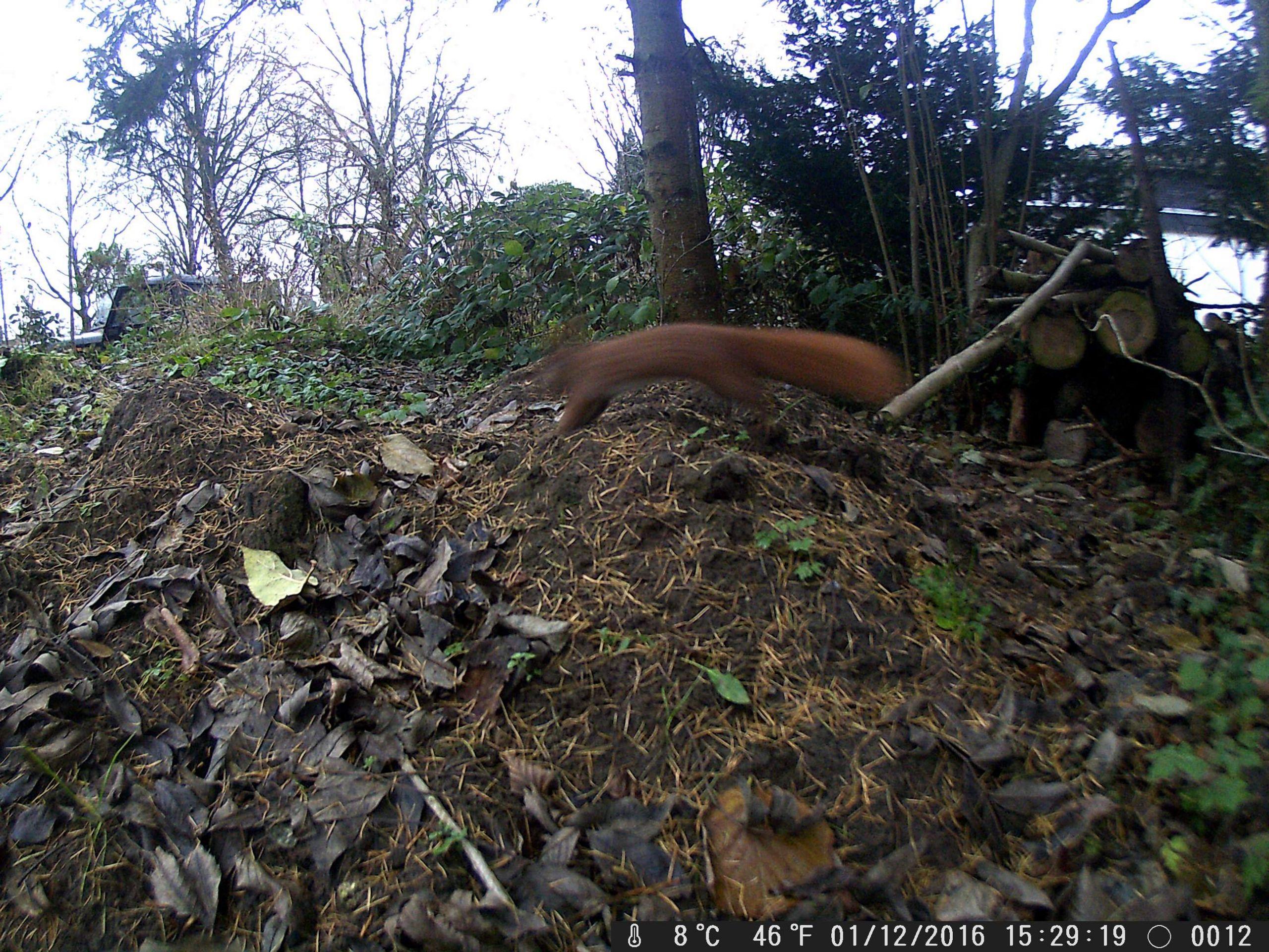 Vögel In Unserem Garten Neu Selfies Von Tieren [archiv] Outdoorseiten