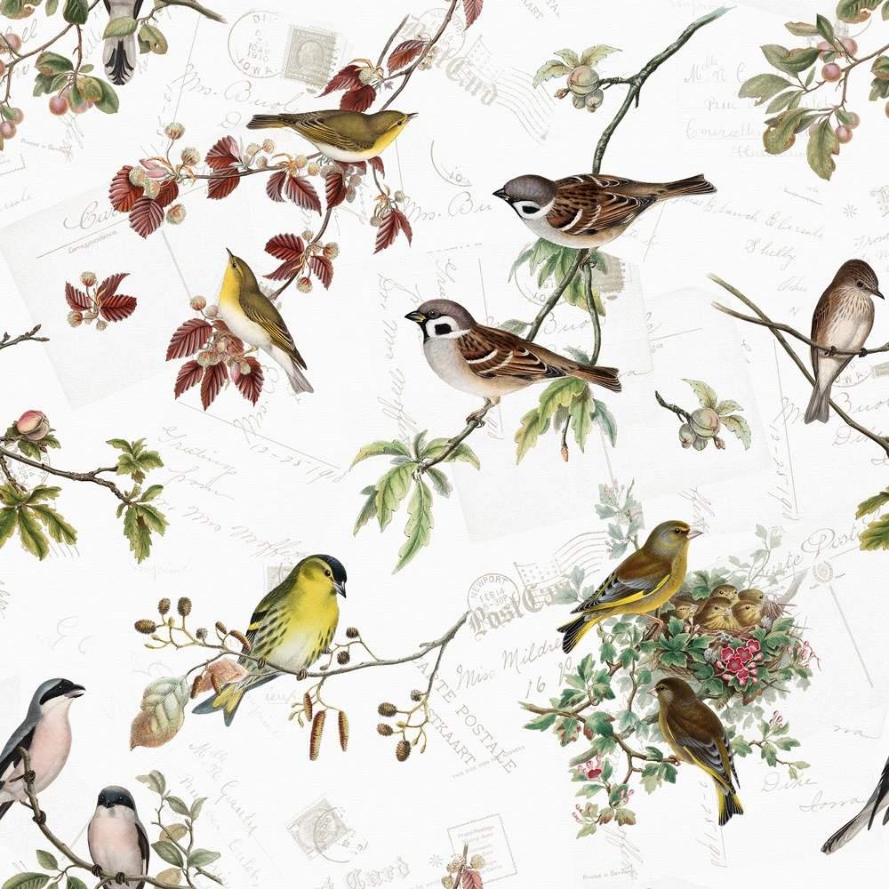 20 servietten bird family heimische vogelarten 33x33cm 23 1280x1280