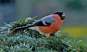 31 Inspirierend Vogelarten Im Garten Neu
