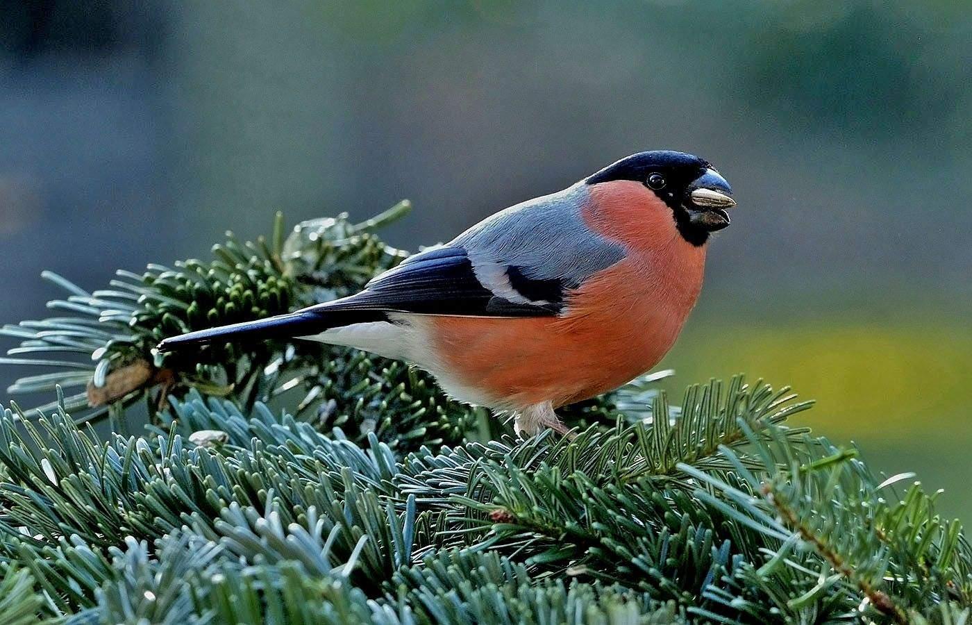 Vogelarten Im Garten Schön Heute Schmeckt Es Wieder Allen Im Garten Auch Dem