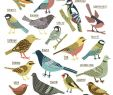 Vogelarten Im Garten Schön Kate Sutton Illustration British Garden Birds