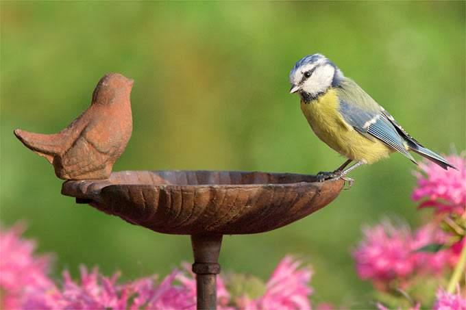 Vogeltränken Für Den Garten Das Beste Von Vogelfreundlicher Garten Nabu