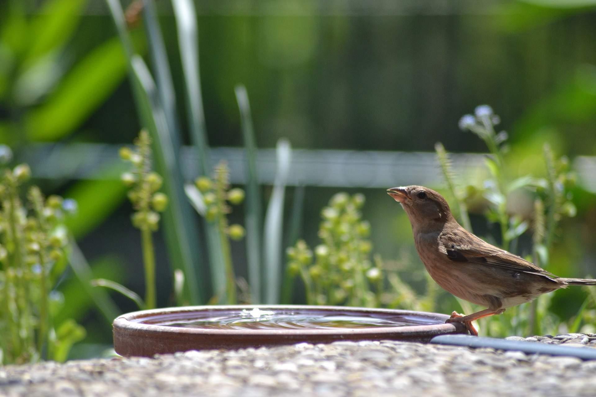 Vogeltränken Für Den Garten Inspirierend Vogeltränken Für Den Garten Eichler Gartenideen