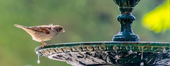 gartendeko vogelbad