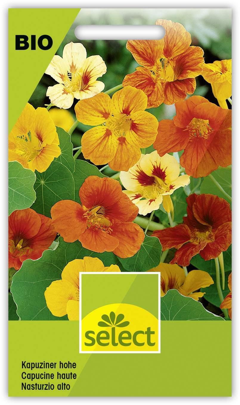 garten ringelblume genial kapuziner hohe of garten ringelblume