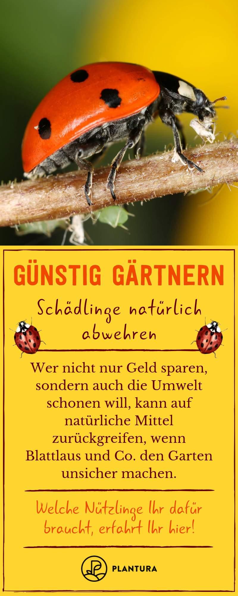 Was Hilft Gegen Ameisen Im Garten Luxus Die 133 Besten Bilder Von Pflanzenschutz Im Garten