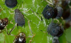 40 Genial Was Hilft Gegen Ameisen Im Garten Reizend