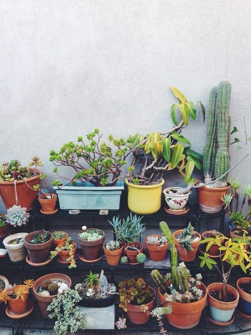 garten busche genial sadzenie balkonu 60 oryginalnych pomysac282c2b3w of garten busche