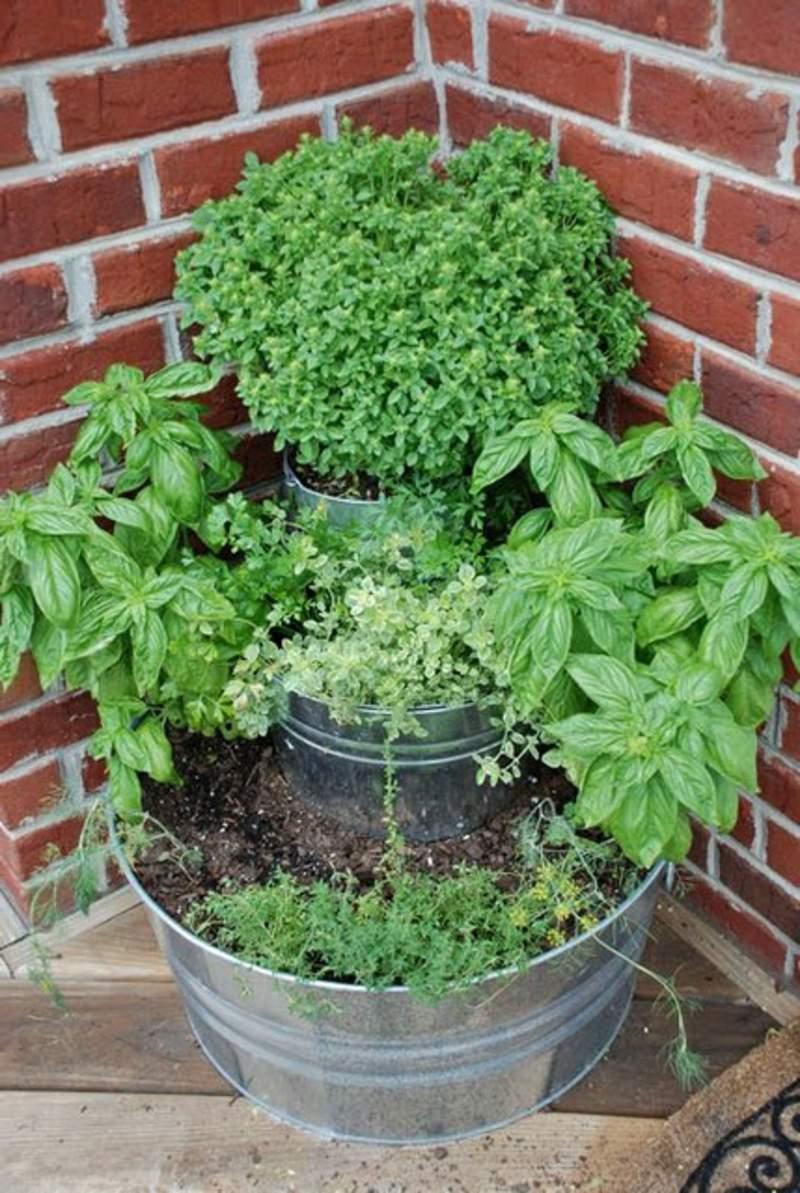 Was Hilft Gegen Mücken Im Garten Reizend 27 Luxus Garten Büsche Schön