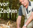 Was Tun Gegen Zecken Im Garten Genial 5 Tipps Zum Schutz Vor Zecken Gesund Und Vital