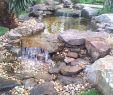 Wasser Garten Reizend Landscaping Ideas Yards Acreage Landscapingideas