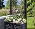 Wasserfass Garten Luxus Pflanzenkasten Mit Spalier Anthrazit Groß