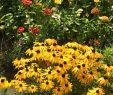 Wassertonne Garten Einzigartig Pin Von Angelika Hausdörfer Auf Garten