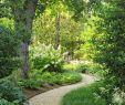 Wege Im Garten Anlegen Elegant Pin Von Renate Schenkeli Auf Pflanzen