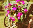 Weinkisten Deko Garten Neu Gartendeko Gartengestaltung Gartenliebe Garten Blumen