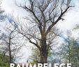 Welcher Baum Passt In Meinen Garten Das Beste Von Baumpflege Baumbiologische Grundlagen Und Anwendungen