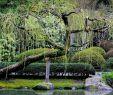 Welcher Baum Passt In Meinen Garten Elegant by Aurora Santiago