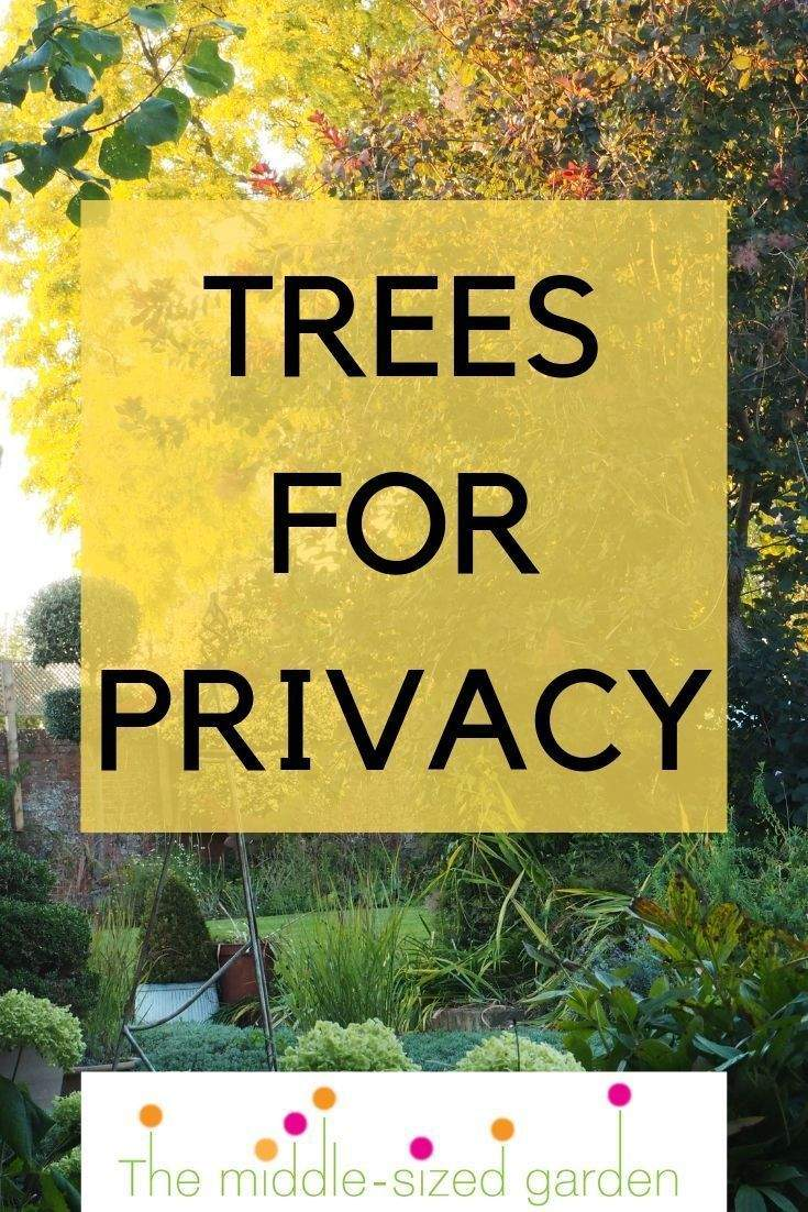 Welcher Baum Passt In Meinen Garten Schön Die 8 Besten Perfekt Für Privatsphäre Gartenbäume
